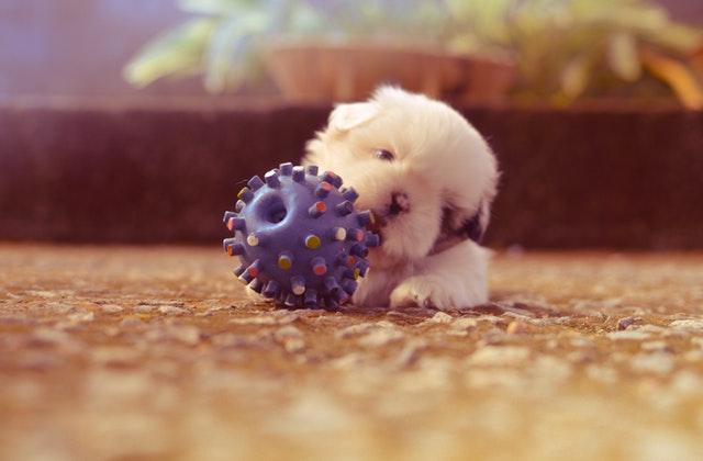 Zabawki idealne dla twojego psa